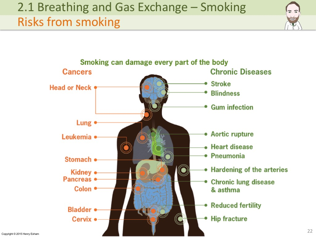 2 1 Breathing And Gas Exchange