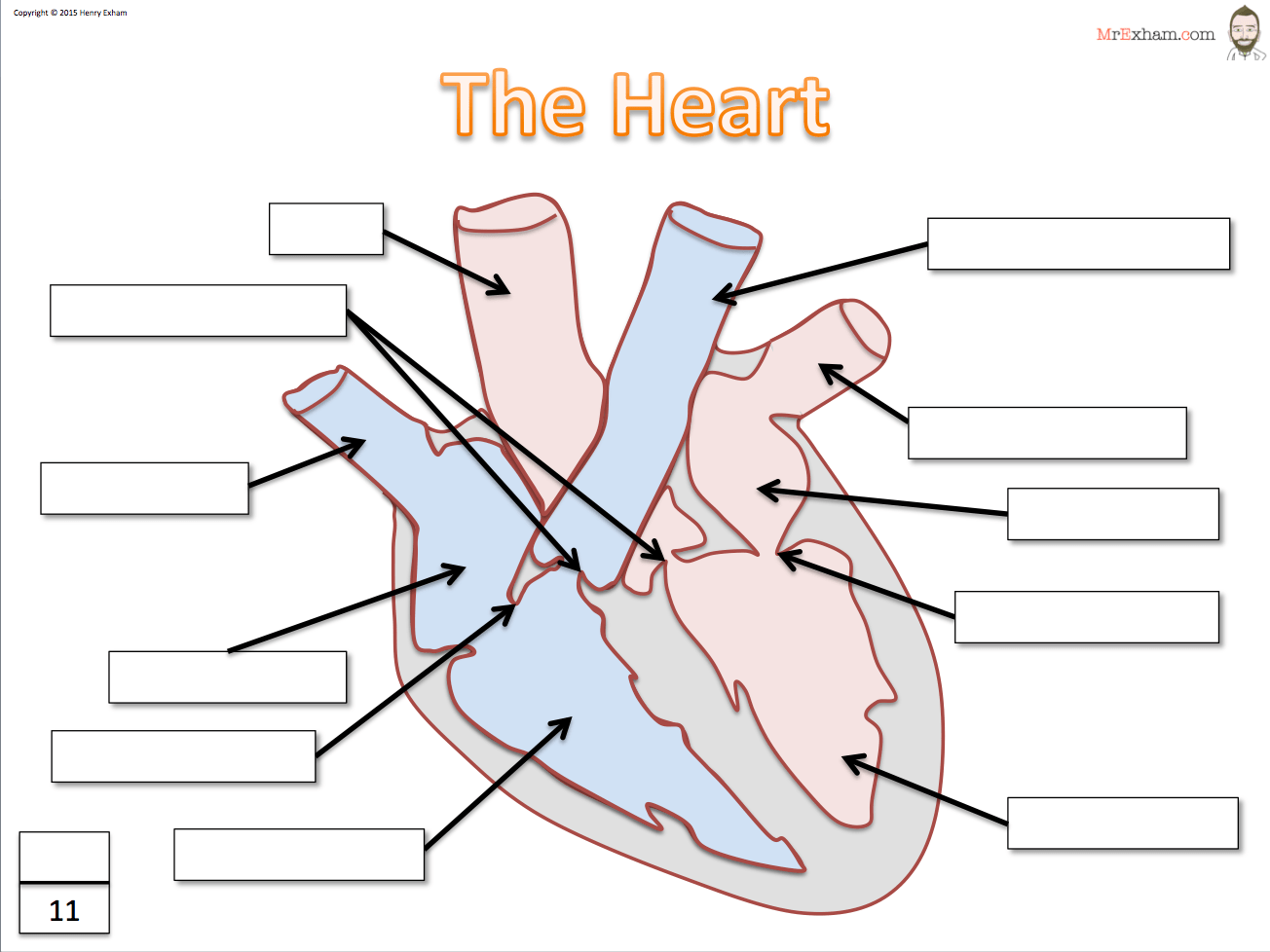 Animal Heart Diagram