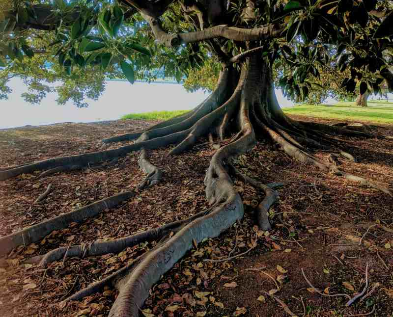 3 Financial Lessons Learned from a Fallen Tree