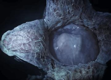 熱血沸騰!《異形:聖約Alien: Covenant》首支電影預告出爐