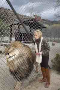 Tippi Hedren and lion at The Roar Foundation's Shambala Preserve, which she founded and runs