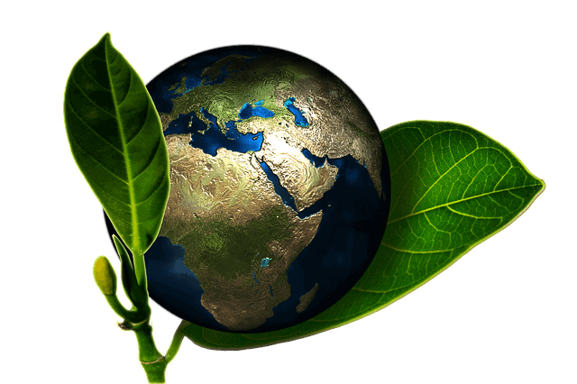 Examine The Company's Commitment to Green Cleaning