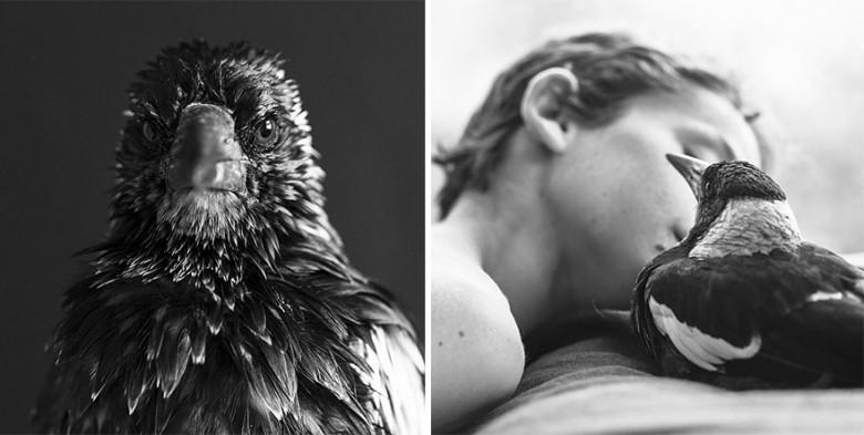penguin-magpie-rescue-friendship-bloom-family-australia-22