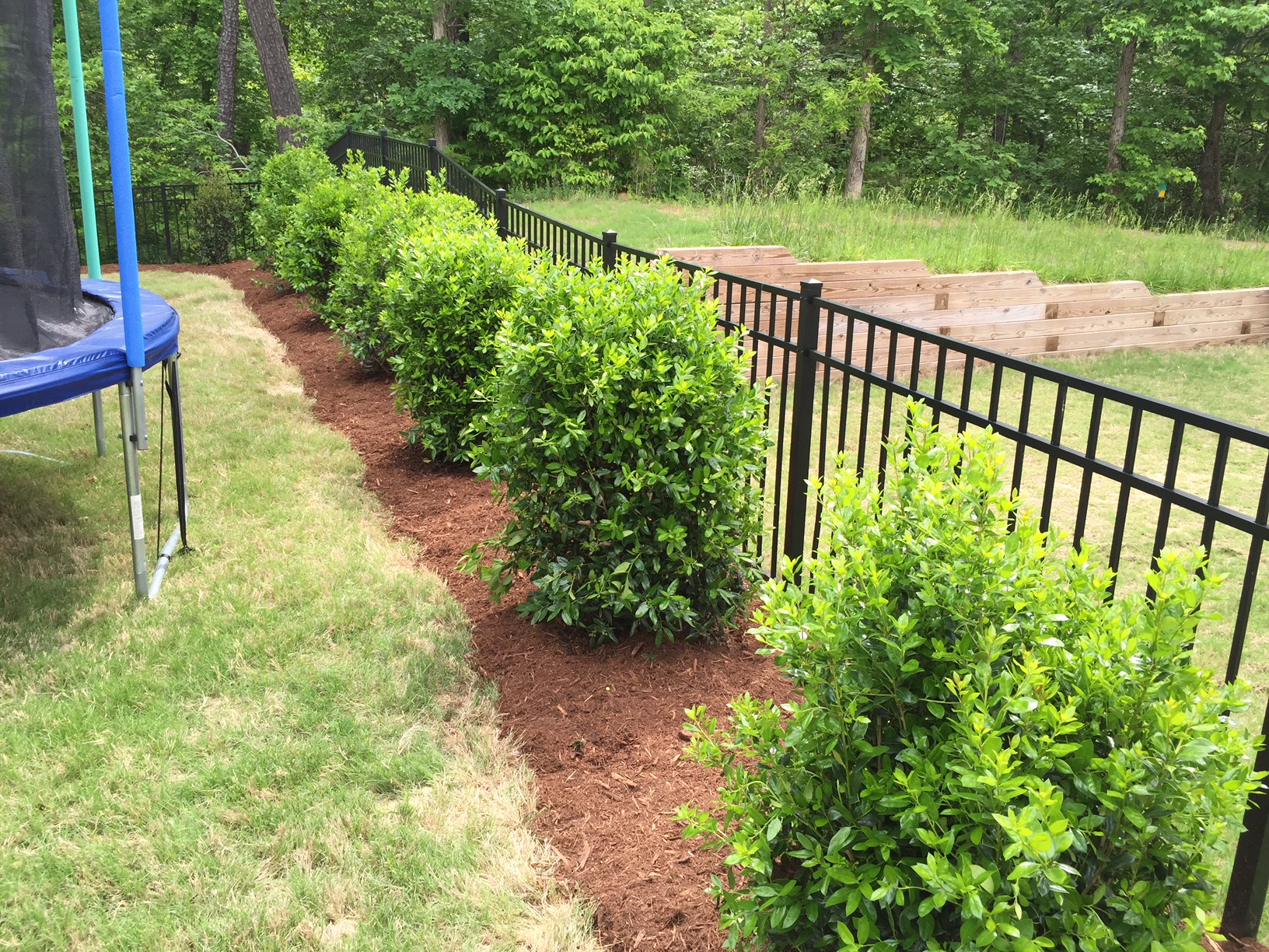 Privacy Landscaping - Mr. Outdoor Living