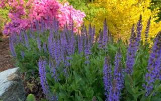 Springtime Mix of Color