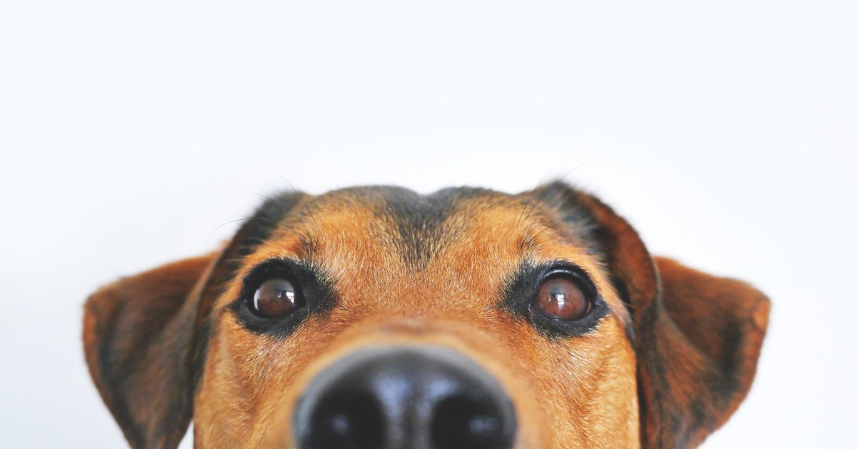 Do Changes in Barometric Pressure Affect Your Dog?