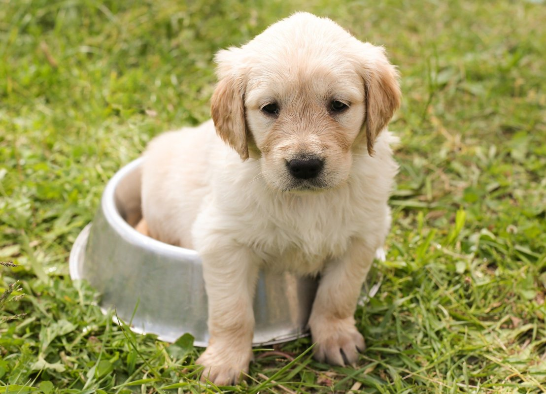 The History of Dog Clothes-How Did Your Dog Come to Wear Clothes?