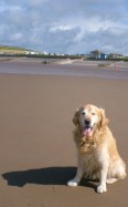 Jack and his shadow: St Bees 2008