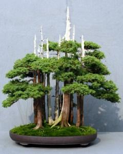 Zen Garden Bonsai