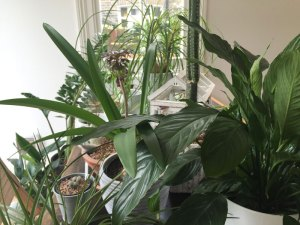 What exactly do gardeners do in winter: House Plants