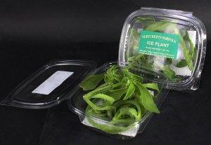 Edible flowers: Ice Plant