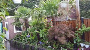 Plant lover: 10 reasons why I love plants so much - Jermain's tropical paradise