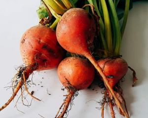 5 benefits of having an allotment: 'Burpees Golden' beetroot