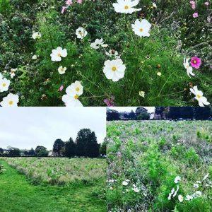 Secrets of good garden design - extending the seasons