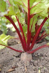 Gardening jobs: Sow outdoors