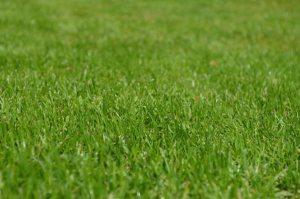 Gardening jobs: Apply lawn feed