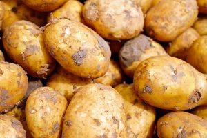 Gardening jobs: Plant potatoes
