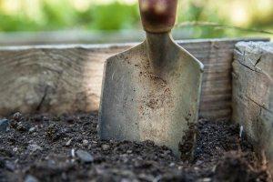 Gardening jobs February: Mulch borders