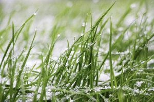 Gardening jobs February: Snow mould on lawns