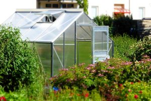 Gardening jobs: Clear leaves from the greenhouse gutters