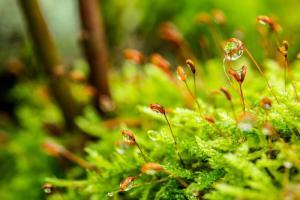 Gardening jobs for June: Watering