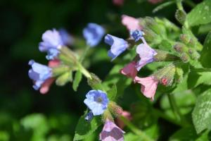 Gardening jobs for May: Cut back early spring flowers