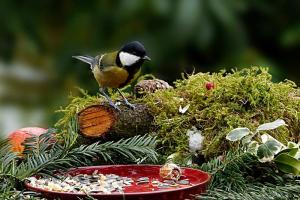 Gardening jobs for November: Feed the birds