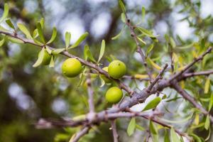 Gardening jobs for October: Order fruit trees
