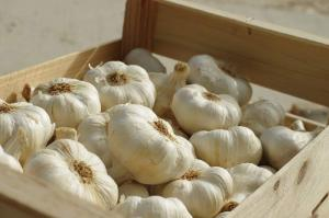 Gardening jobs for October: Plant garlic