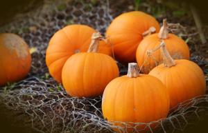 Gardening jobs for October: Harvest pumpkins and squash