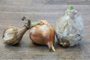 Gardening jobs for September: Order bulbs