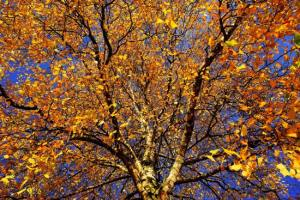 Plant Evolution: Deciduous trees