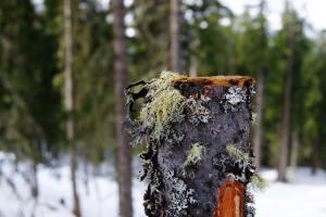Plant Evolution: Lichen
