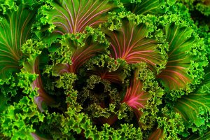 Grow your own fitness: Kale