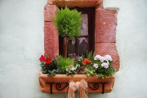 Grow your own fitness: Window Box