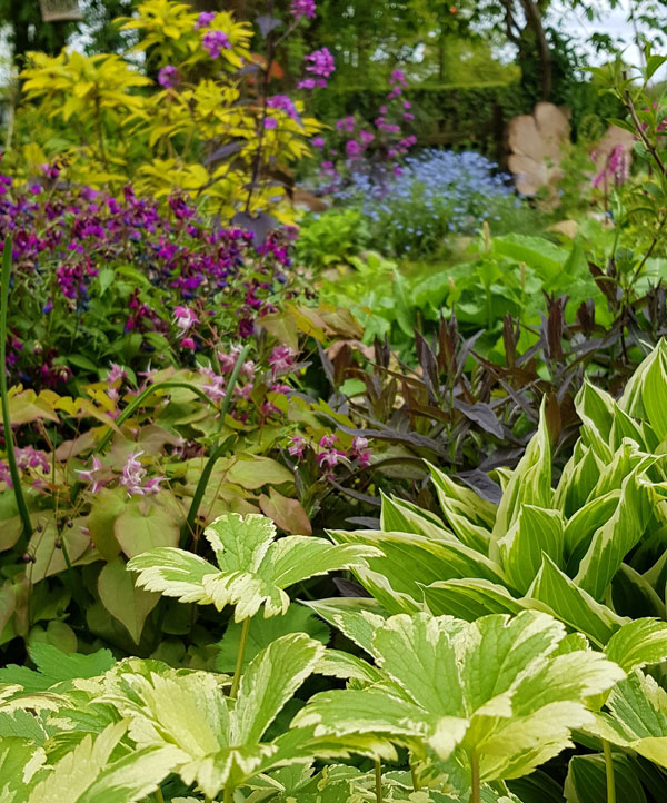 Win an 'Instant Garden' with Mr Plant Geek and Suttons