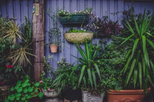 From rural to urban gardening