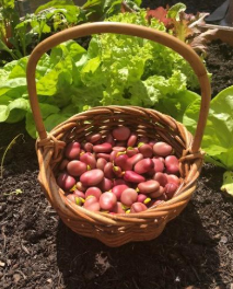 National Allotment Week: 7 foolproof allotment plants