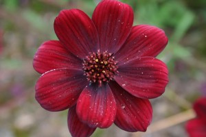 10 unusual plants for kids
