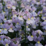 2019 planting trends