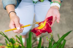 Drag Queens and Daylilies