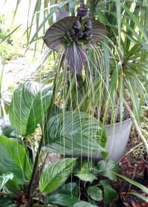 Unusual houseplants: Weird & Wacky plants for your home