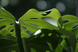 Plant trypophobia