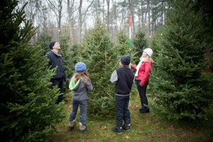 Choosing your Christmas Tree
