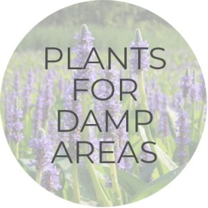 Plants for Damp Areas | Plant Guide