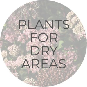 Plants for Dry Areas | Plant Guide