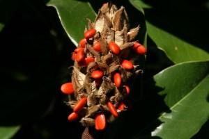 Plastic free gardening - seeds