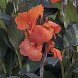 Pantone Colour of the Year: Canna Cannova