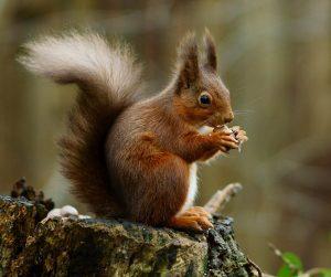 Attract UK Wildlife