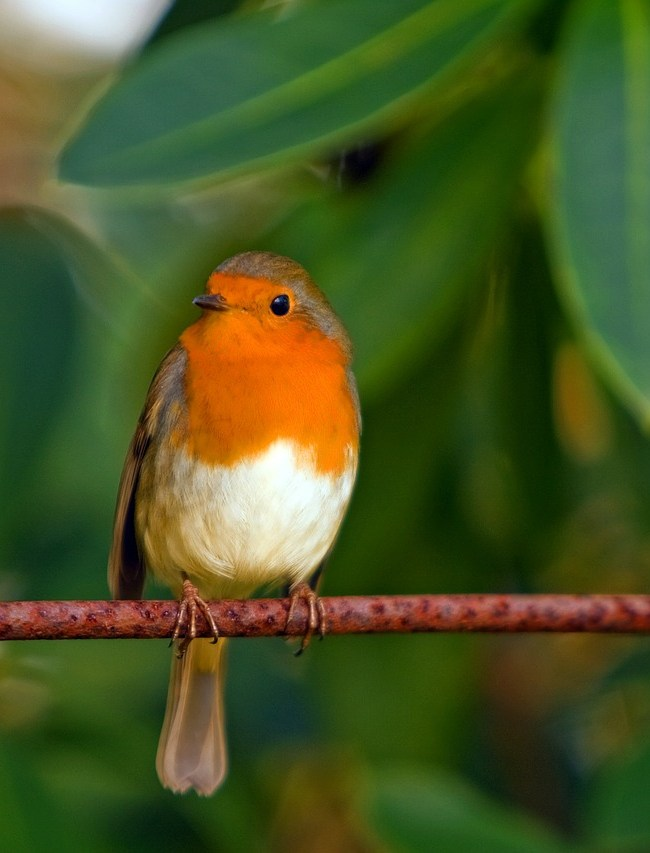 Attract UK Wildlife to your Garden
